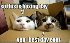boxing day kitties cats in a box
