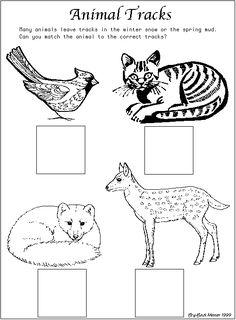 Simple animal tracks matching page