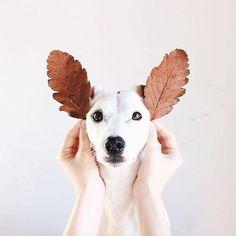 Leaf ears dog, cute, and animal image