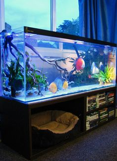 42 Astonishing Aquarium Design Ideas For Indoor Decorations - An aquarium is an enclosure with at least one clear side that houses water-dwelling fish, plants and other livestock and decorations. An aquarium offe. Aquarium Stand, Diskus Aquarium, Aquarium Terrarium, Nature Aquarium, Saltwater Aquarium, Saltwater Tank, Discus Tank, Discus Fish, Betta Fish