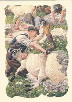 Sheep Shearing in East Cheshire by Charles by OLDBOOKSMAPSPRINTS, £8.00