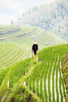 Lonely Planet - The Perfect Trip to China
