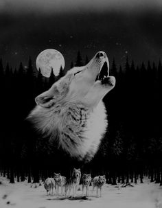 Shop Wolf Poster created by Personalize it with photos & text or purchase as is! Lobo Tribal, Tribal Wolf, Wolf Wallpaper, Animal Wallpaper, Beautiful Wolves, Animals Beautiful, Wolf Poster, Wolf Artwork, Wolf Painting