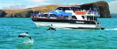 The Harbour   Akaroa – New Zealand Akaroa New Zealand, Hector Dolphin, Sparkling Waters, New Zealand South Island, Safe Haven, Small World, Dolphins, Scenery, Boat