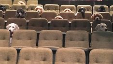 Canadian service dogs attend 'Billy Elliot' production, photo goes viral | Fox News Billy Elliot, Service Dog Training, Service Dogs, Training School, Stratford Festival, Guide Dog, Musicals, Pets, Movies