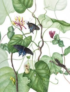 "Draw the Beauty of Nature with Mindy Lighthipe: Botanical Fine Art Painting, Butterfly,Nature ""PIP..."