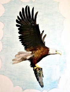 My parents, brother and sister encouraged my artistic talent since I was young. I love watercolor painting wildlife animals & nature, and like. Art Watercolor, Watercolor Animals, Great Paintings, Original Paintings, Eagle Art, Cool Art, Awesome Art, Amazing, Vintage Birds