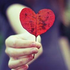 紅葉の時期、赤いハートの葉っぱを見つけたら、その日は一日ウキウキしてしまうかも?