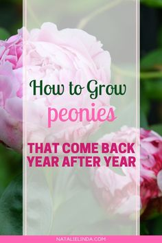 Learn how to plant and grow your own peonies! This low-maintenance perennial will fill your garden with sweet fragrance, beautiful deep-green foliage, and beautiful pink blooms! Growing Peonies, Growing Flowers, Planting Flowers, Flower Gardening, Container Gardening, Gardening Tips, Organic Gardening, Gardening Quotes, Peony Care