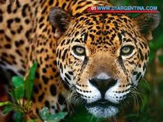 National Parks in Argentina Discover the most important national parks of Argentina: - MISIONES - IGUAZU NATIONAL PARK - SANTA CRUZ - GLACIER NATIONAL PARK - LA RIOJA - NATIONAL PARK TALAMPAYA Read more in link... Check your #Travel #Tours#Packages #Vacations in #Argentina. Different #destinations are waiting for You! 01 Argentina Travel Agency