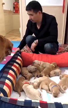 Amazing Ideas and Photography. - Mina - Amazing Ideas and Photography. We have to Love these Puppies. Funny Animal Videos, Cute Funny Animals, Cute Baby Animals, Funny Cute, Funny Dogs, Animals And Pets, Top Funny, Cute Puppies, Cute Dogs