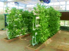 Hot Sell Greenhouses Structure With Hydroponic System