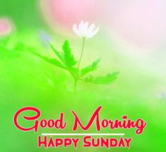 Happy Sunday Hd Images, Free Good Morning Images, Good Morning Happy Sunday, Good Day, Flower Pictures, Nature Pictures, Blessing Message, Sunday Greetings, Days Of Week