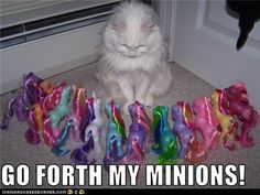 I had an all white cat (her name was Katya) and my sister had a HUGE collection of my little ponies so this makes me laugh