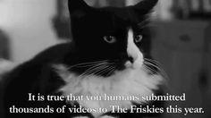 "Henri - ""Vote for The Friskies"""