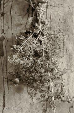 Herbs,black&white photography