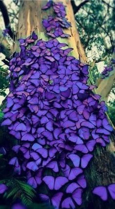 Purple Butterflies