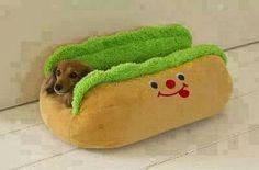 Hotdog.