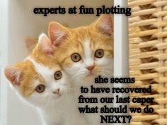 Experts at fun plotting