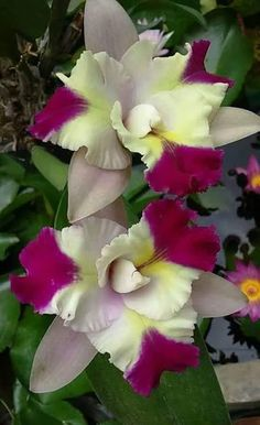 Beauty Of Orchids - Comunidade - Google