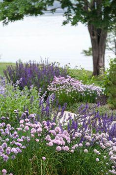 Landscape Architect Visit: Clamshell Alley on the Coast of Maine by Matthew Cunningham: Gardenista Purple Perennials, Hardy Perennials, Violet Garden, Purple Garden, Purple Plants, Palette Garden, Garden Cottage, Garden Borders, Exterior