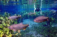 Bonito - MS  Aquário natural, formado por um pequeno rio. Um lugar deslumbrante.