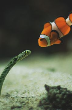 I thought that this was just the most unique, and adorable picture ever! A garden elver and a clown fish!!
