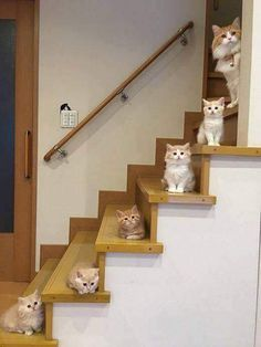 Cute Cats And Kittens Cute Kittens Meowing - Best Pins Live Cute Funny Animals, Cute Baby Animals, Funny Cats, Cats Humor, Funny Horses, Fluffy Animals, Cute Kittens, Kittens Meowing, Ragdoll Kittens