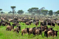 Top 10 African Safari Tour Operators