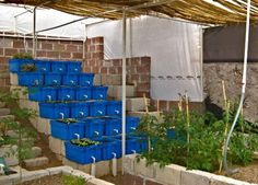 Here is our aquaponics greenhouse, which we have nicknamed the ...
