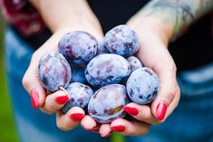 Plum Tree, Blueberry, Fruit, Poultry Farming, Gardens, Bread, Photos, Berry, Pictures