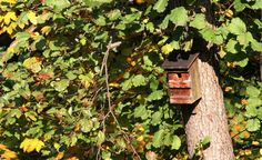 Viele Vogelarten finden inzwischen bei uns kaum noch geeignete Brutplätze. Helfen Sie den Vögeln, indem Sie am Haus oder im Garten Nistkästen aufhängen. Mit unserer speziellen baumfreundlichen Methode müssen Sie dafür nicht einmal einen Nagel in den Stamm schlagen.