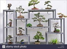 indoor #bonsai garden