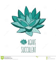 hand drawn botanical aloe vera stock photos images u0026 pictures