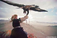 Cazador de águilas kazakh, Mongolia.
