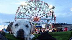 Poh's big adventure: man takes dying dog on a bucket list trip across the United States