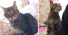 Ce vieux chat qui a perdu sa maison coule désormais des jours heureux Orion, un chat européen de 16 ans a perdu la seule maison qu'il connaissait.Mais ça, c'était avant l'arrivée d'un centre d'adoption au Texasqui lui a offertun second toit pour une nouvelle vie...