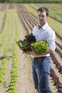 How to Cut Lettuce So It Keeps Growing thumbnail