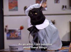 Sabrina the teenage witch Cat Memes, Funny Memes, Hilarious, Salem Sabrina, Salem Cat, Salem Saberhagen, Tv Spielfilm, Cute Couples Teenagers, Hard Rock Hotel
