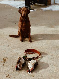 Handmade Leather Game Hanger, Hunting Gear, Handstitched, Pheasant Hanger, Duck Hanger, Hunting Gear, Hunting Dogs, Leather Working, Hand Stitching, Labrador Retriever, Happy, Handmade, Animals, Instagram