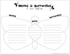 Life cycle of a moth free printables venn diagrams moth and diagram relentlessly fun deceptively educational moths and butterflies another lesson in differences ccuart Gallery