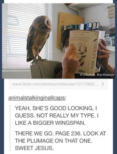 32 Chirp-ful Memes For All You Bird Lovers Out There - I Can Has Cheezburger? Cute Jokes, Funny Cute, The Funny, Funny Sexy, Funny Animal Memes, Cute Funny Animals, Funny Memes, Hilarious Sayings, Animal Humour