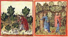 LES HERBES AROMATIQUES et CONDIMENTS au MOYEN AGE, LES PLANTES DU JARDIN MEDIEVAL UTILISEES DANS LES RECETTES DE CUISINE, Les herbes aromatiques comme la sauge, la moutarde, le persil, le carvi, la menthe, le fenouil et l'aneth étaient cultivées et consommées dans toute l'Europe.