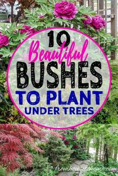 This list of #shrubs is perfect for my shade #garden. I wasn't sure how to fill in the garden bed and now I have a bunch of options. I really like the 4th one. #fromhousetohome #shadegarden #perennials #gardening #gardeningtips #gardenideas