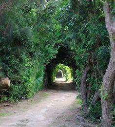 Hidden tree tunnels on the secret Railway Trail in Bermuda
