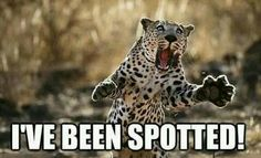 Animal puns are the best @Beth J J Williams Animal Puns, Funny Animal Memes, Funny Animals, Cute Animals, Funny Memes, Funny Quotes, Steve Bloom, Funny Pictures With Captions, Hilarious Sayings