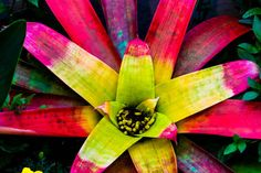 Jungle Flower Plant Green Yellow Red Pink Leaves by ContrastStudio, $25.00