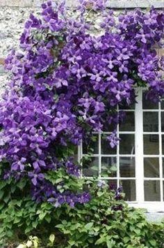 Klätterväxter | Yourgarden