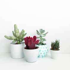 Cacti all in a row <3 #cacti #succulents #planters #design