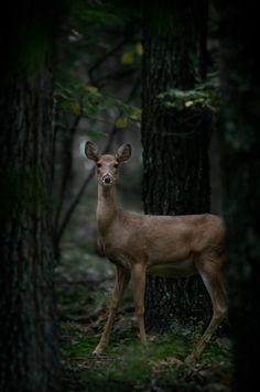 {<3} Deer